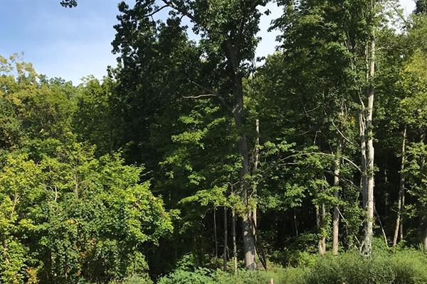 Mohler Woods