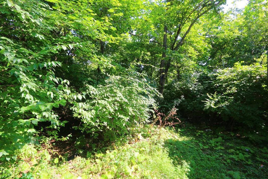 Wooded View for 2024 Weron Ln Westwood, OH 45225